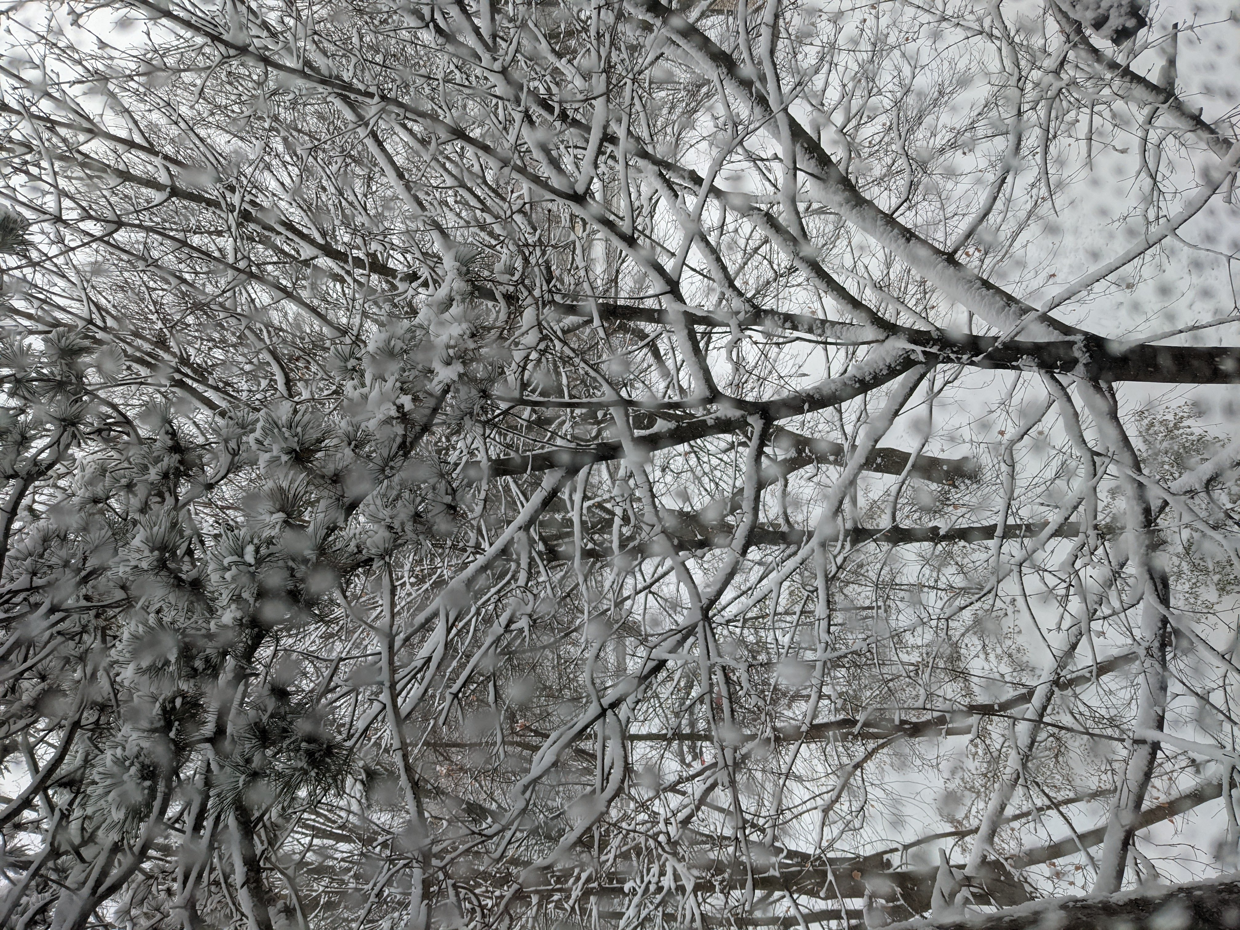 Picture taken out a window looking onto a lot of snowy branches.